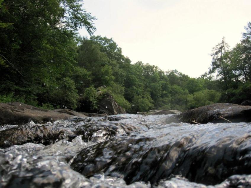 meadow river